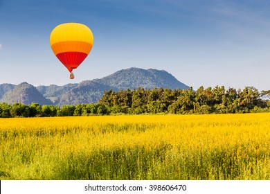 color balloon over The farm of Crotalaria Juncea flower which use for soil improvem