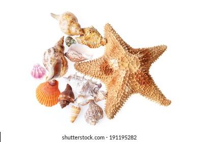 color beautiful sea cockleshells and starfish