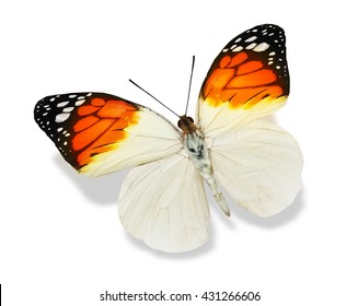 Color butterfly, isolated on white