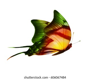 Color butterfly , isolated on white