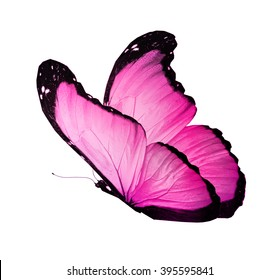 Color butterfly on white background