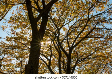 Color changing leaves tree silhouette and sunshine