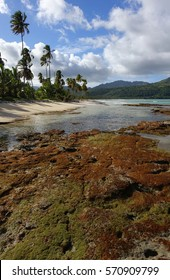 Color coral reef in the foreground with palm trees, blue water and a sandy beach at Playa Rincon in the Dominican Republic