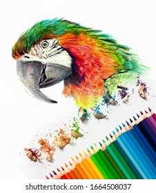 Color drawing of a macaw parrot head on white background. Colored watercolor pencils, photography art materials. Sketch in progress