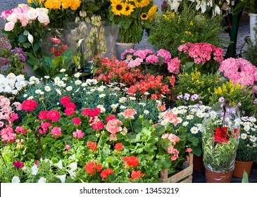 Color DSLR image of outdoor flower shop, with multiple types of bright blooms. Horizontal.