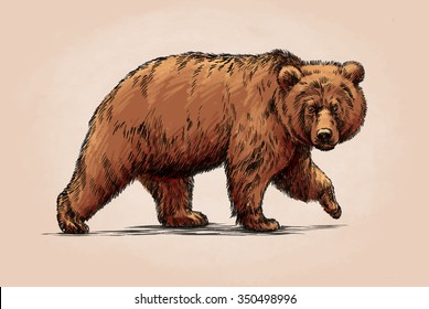 color engrave isolated grizzly bear