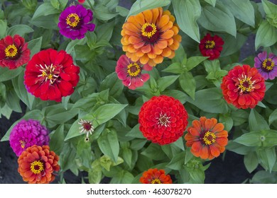 Color flowers on summer day. Background abstract