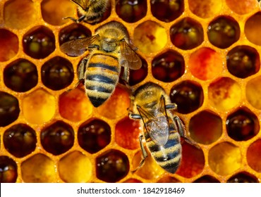 Color harmony in a bee hive.  Pollen is food for bees.