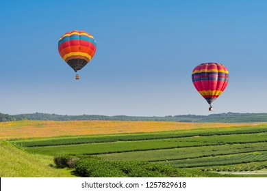 color hot air balloon over tea plantation farm with blue sky background