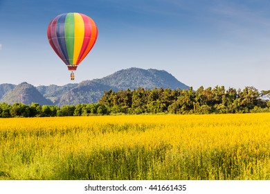 Color Hot air balloon over The farm of Crotalaria Juncea flower which use for soil improvem