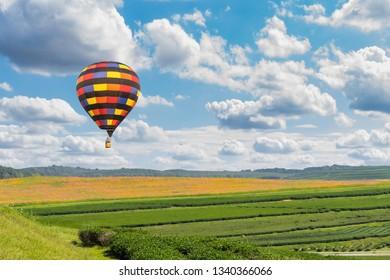 color hot air balloon in sky over tea plantation farm and cosmos flower garden