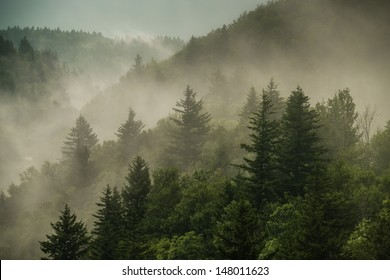 Color image of the clouds flowing through the pine trees along the Blue Ridge Parkway in Western North Carolina.