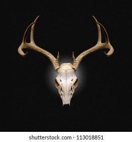 Color Image of Deer Skull on a black background