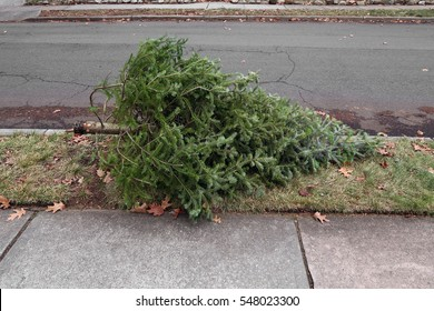 Color image of a discarded Christmas tree, outside on the side of the road.
