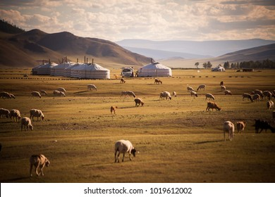 Color image of some Mongolian yurts on a field.