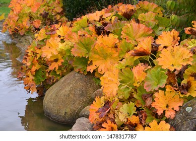 Color leaves. Garden and autumn plants.
