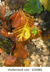 Color leaves in a stream