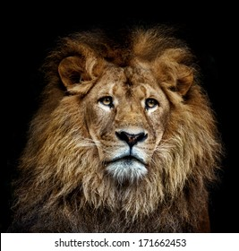 a color lion portrait on black background