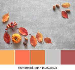 Color matching palette from Autumn background with orange pumpkin and red leaves on gray concrete