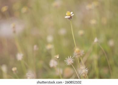 color of meadow