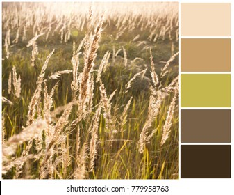 Color palette. Harmonious combination of colors. Color theory and mixing. Natural background with gold grass.