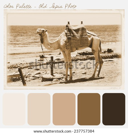 Color Palette Old Sepia Photo Stock Photo Edit Now 237757384