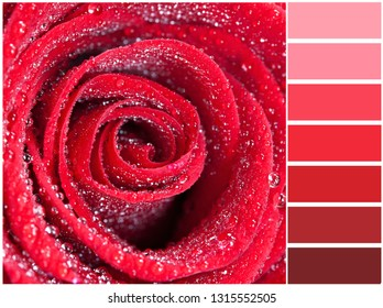 Color palette series: shades of scarlet