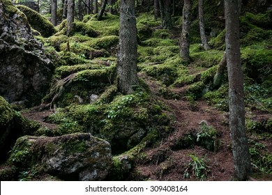 Color picture of trees and moss in a forrest