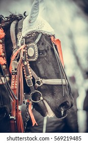 Color shot of a horse decorated with red ribbons.