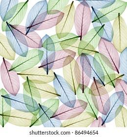 Color Skeleton Leaf  for background
