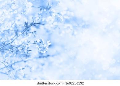 Sakura Blue High Res Stock Images Shutterstock