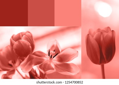 Color of the year 2019. Creative collage in Living Coral color. Main trend concept. Natural mood. Color of the year 2019.