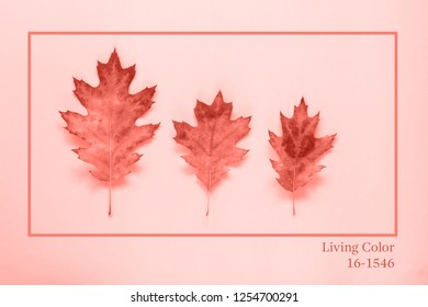 Color of the year 2019 Living Coral. Living Coral background with autumn leaves. Place for your text or logo. Autumn season concept. Flat lay style.