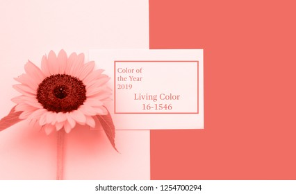 Color of the year 2019 Living Coral. Top view flat lay picture with notepad as mockup for your design and FLOWER. Copyspace for your text.
