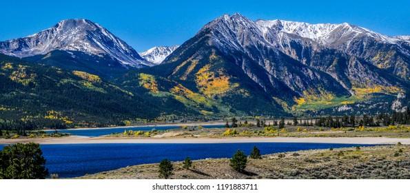 Colorado Aspens in Winter