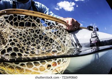Colorado Mountain Trout Up Close Fish Photo