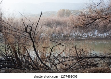 Colorado Riverbank in Winter