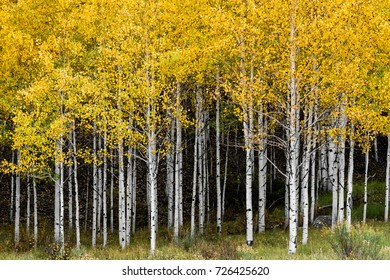 Colorado Rocky Mountain Scenic Beauty - The Aspens on Sunset Mesa in the San Juan Mountains.