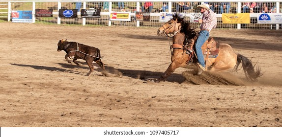 Colorama Pro-West Rodeo in Grand Coulee, Washington State, USA - May 12, 2018: Cowboys competing in tie down roping in  Grand Coulee, WA
