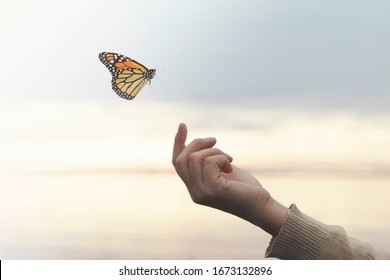 a colorated butterfly leans on a woman's hand