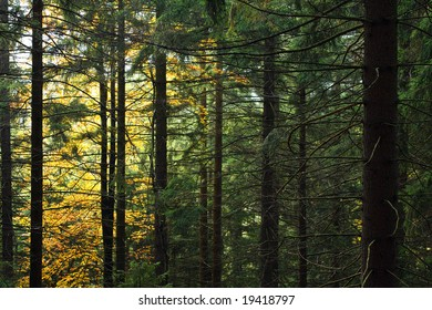 Colored Autumn background from beautiful Czech National Park Sumava - Europe