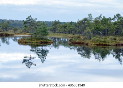 Colored autumn morning in a Kakerdaja bog, Estonia. a mirror image of the glassy water