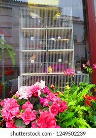 Colored canaries in multi storey bird cage in florest window in Andalusian village