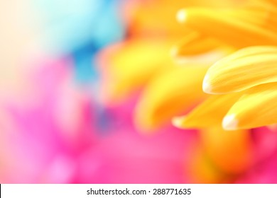 Colored daisy petals