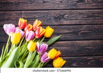 Colored fresh tulip on wood desk. Spring flower. Nature background