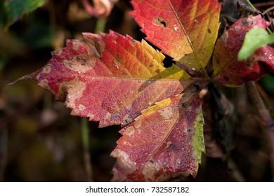 Colored leaf in autumn season