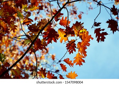 Colored leaves against a blue sky