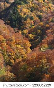 Colored leaves of hillside