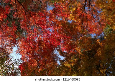 Colored leaves of Izu Peninsula, Shizuoka, Japan