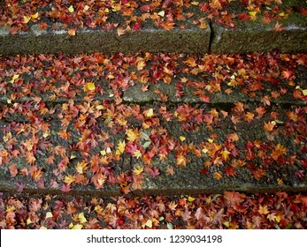 Colored leaves (Maple and ginkgo)